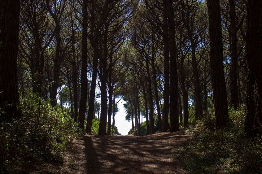 The forest of Cecina