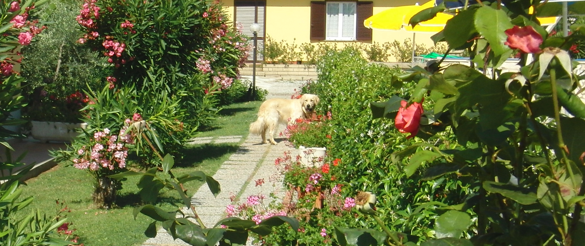 Agriturismo pet friendly a Vada